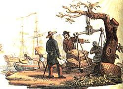 mercadores de café no séc XIV